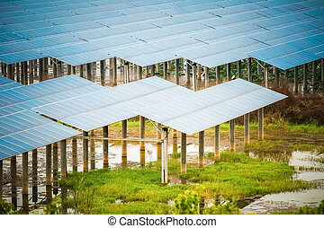 solar energy in swamp