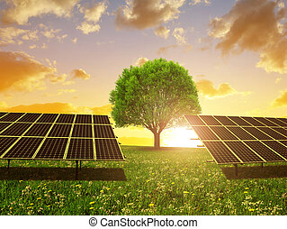 Solar energy panels and tree