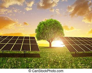 Solar energy panels and tree