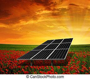 solar energy panels on the poppy field in the sunset