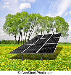Solar energy panels on dandelion field