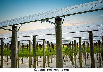 solar farm in sunset - solar power station in sunset , clean...
