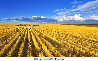 solar, mediodía, en, campos, de, montana