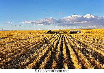 Solar midday on fields of Montana - Solar autumn midday on ...