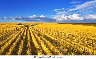 Solar midday on fields of Montana - Solar autumn midday on...