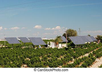 solar, painéis, em, um, laranja, plantação, em, espanha