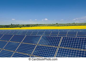 solar, painéis, em, um, rapeseed, campo