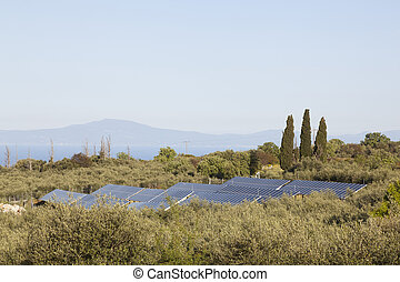 solar panels between olive trees on part of greek peloponnese called Mani