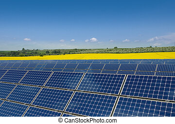 Solar panels in a rapeseed field - Solar panels against a...