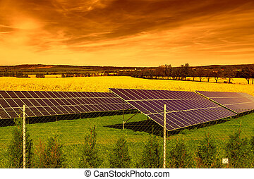 Solar panels on green grass at sunset