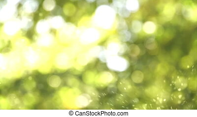 Solar pollen - Random movement of pollen on a green...