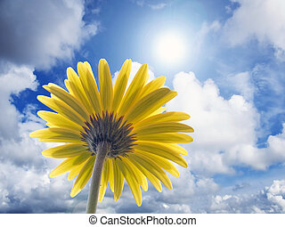 solar power - gazania flower on sunny background