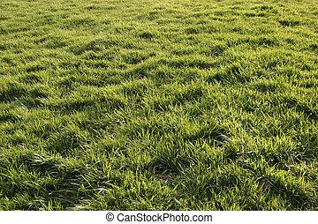 solbelyst, gräs