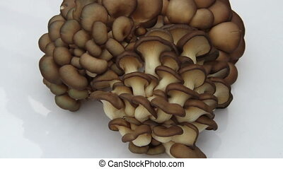 sold display for oyster mushrooms - sold display for large...