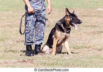 soldats, unité, chien, k-9