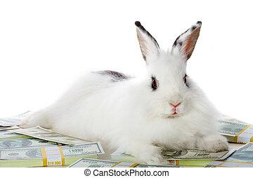 soldi, coniglio