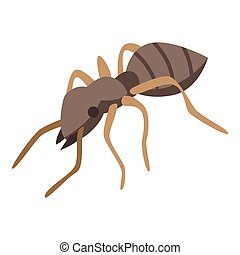 Soldier ant icon, isometric style