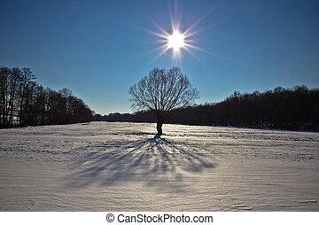 sole, albero, paesaggio neve, sotto