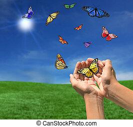 sole, farfalle, verso, fuori, volare