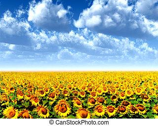 sole, fiori