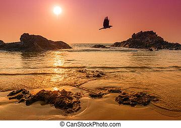 sole, sopra, volare, crow., tinted., mare