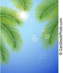 soleado, cielo azul, y, palma, branches.