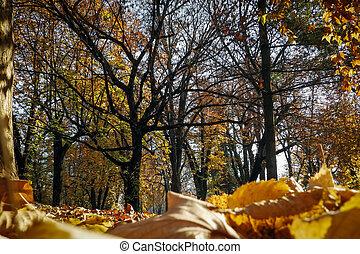 soleado, día de otoño, en, el, parque