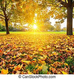 soleado, follaje de otoño