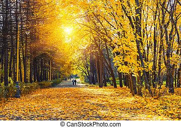 soleado, otoño, parque
