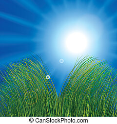 soleggiato, erba, cielo