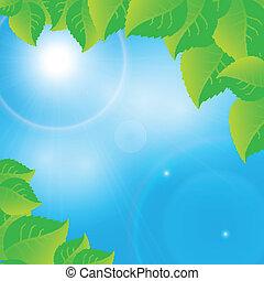 soleggiato, foglie, cielo, sfondo verde
