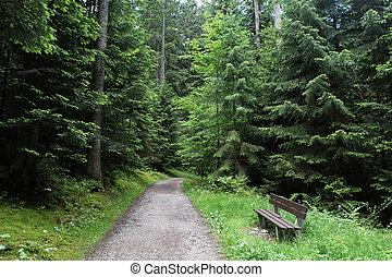 soleggiato, foresta, giorno