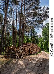 soleggiato, foresta verde, in, il, estate, polonia