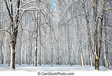 soleggiato, inverno, foresta
