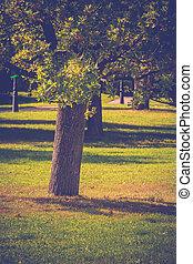 soleggiato, parco città, retro