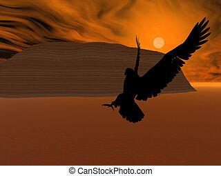 soleil, aigle