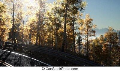 soleil, appareil photo, par, forêt, feuillage, mouvement, route, briller