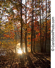 soleil, automne