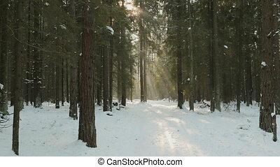 soleil, bois, hiver, lumières