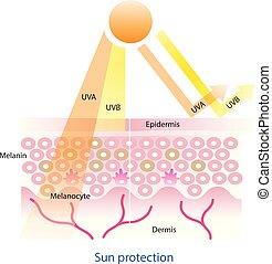 soleil, couche, protection, vector., peau