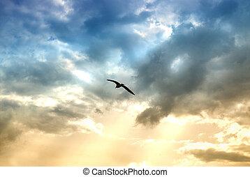 soleil, dramatique, nuages, oiseau, rayons