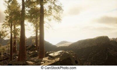 soleil, falaise, lumière, arbres