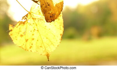 soleil, feuilles, briller, par, automne