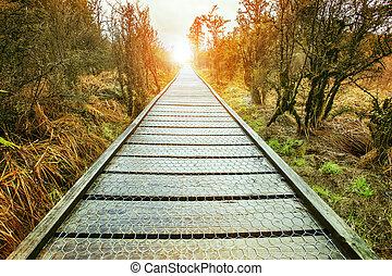 soleil, levée, fin, de, perspective, bois, marche, sentier, dans, naturel, sauvage