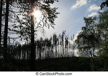 soleil, par, arbres