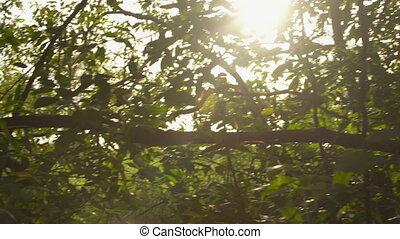 soleil, par, crêtes, arbres