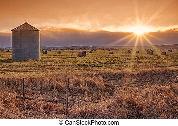 soleil, prairie, coucher soleil, éclater