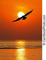 soleil, seagull vole, silhouette, crépuscule