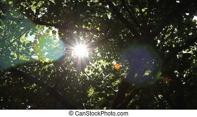soleil, shines, par, arbres.