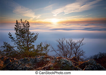 soleil, sur, nuages, arbre, landcape